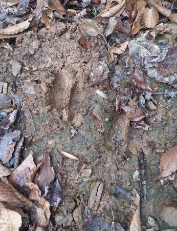Owens Branch Forest 015