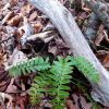 Owens Branch Forest 016