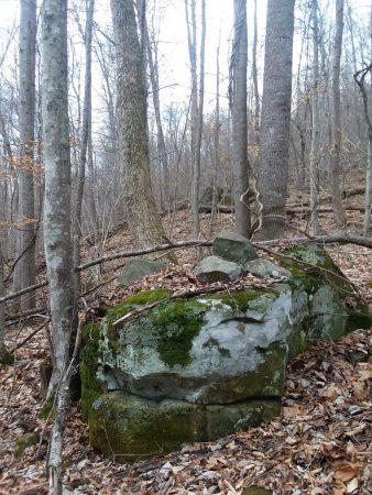 Owens Branch Forest 017