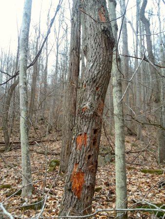 Owens Branch Forest 018