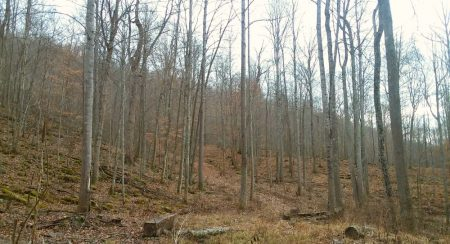 Owens Branch Forest 019