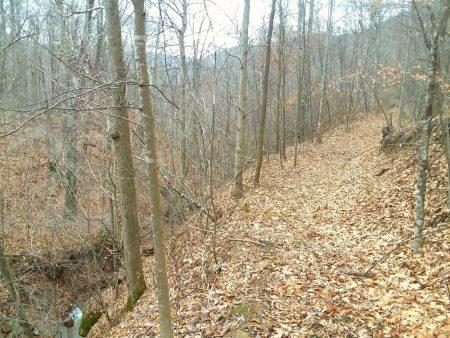 Owens Branch Forest 020