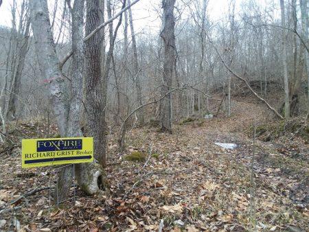 Owens Branch Forest 021