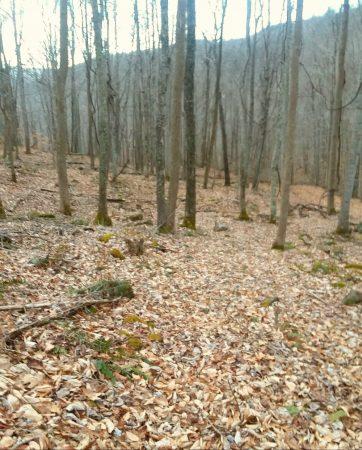 Owens Branch Forest 022