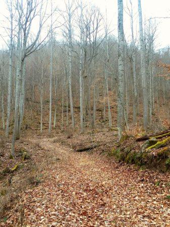 Owens Branch Forest 023