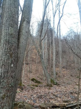Owens Branch Forest 024