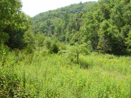 Little Wolf Creek Farm 013