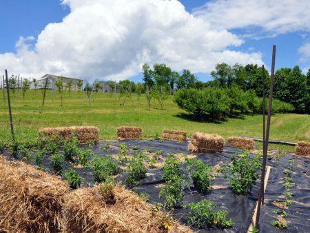 Napallachian Farm 047