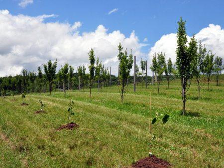 Napallachian Farm 049