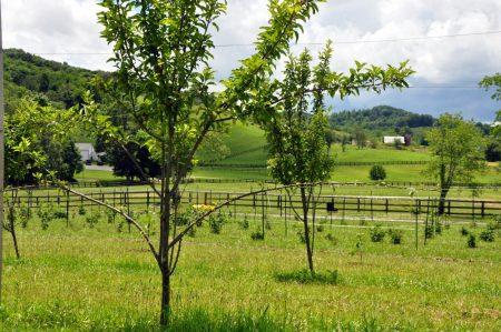 Napallachian Farm 053