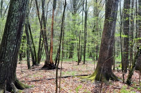 Otter Creek Farm and Forest Tour 009