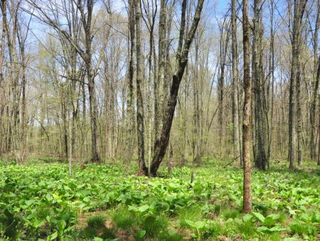 Otter Creek Farm and Forest Tour 013