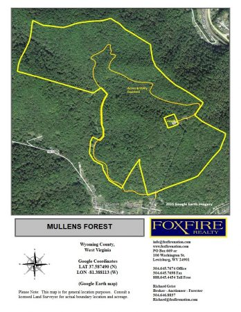 Mullens Forest 002