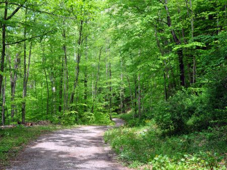 Mullens Forest 004