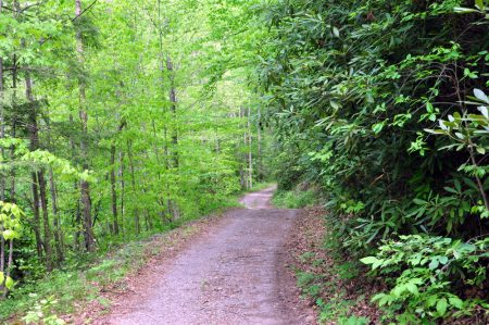 Mullens Forest 008