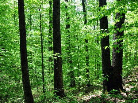 Mullens Forest 012