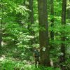 Mullens Forest 016