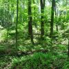 Mullens Forest 017