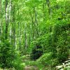 Mullens Forest 021