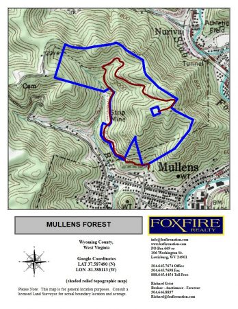 Mullens Forest 036
