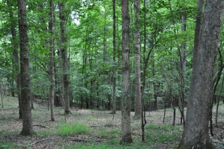 Berthy Forest 026