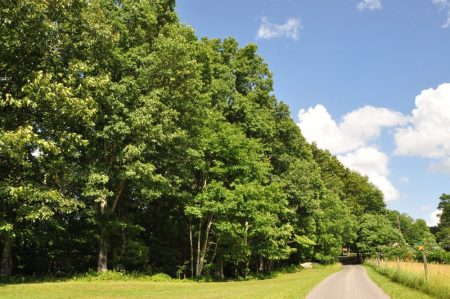 Jackson Forest 002