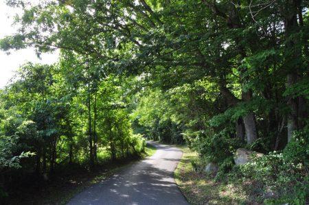 Jackson Forest 003