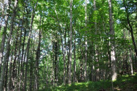 Jackson Forest 004