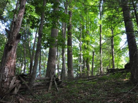 Jackson Forest 005