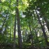 Jackson Forest 009