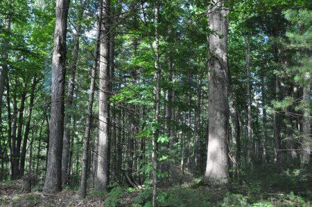 Jackson Forest 010