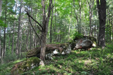 Jackson Forest 011