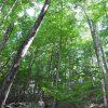 Jackson Forest 012