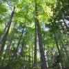 Jackson Forest 013