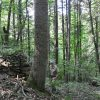 Jackson Forest 014