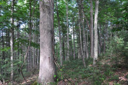 Jackson Forest 017