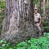 Jackson Forest 020