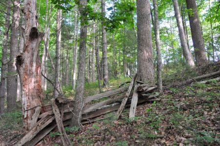 Jackson Forest 021