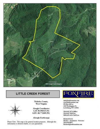 Little Creek Forest 002