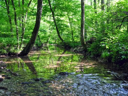 Little Creek Forest 004