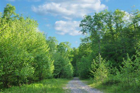 Little Creek Forest 005