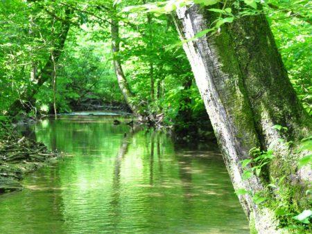 Little Creek Forest 006