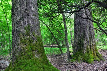 Little Creek Forest 007