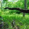 Little Creek Forest 008
