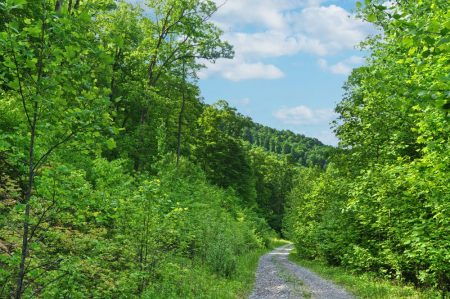 Little Creek Forest 009