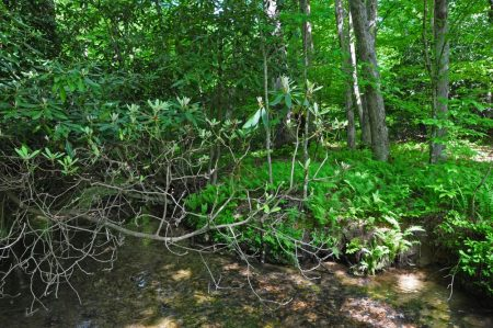 Little Creek Forest 010