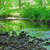 Little Creek Forest 012