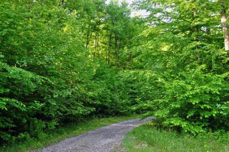 Little Creek Forest 013