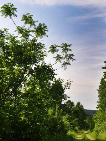 Little Creek Forest 015