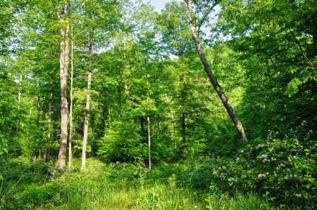 Little Creek Forest 016